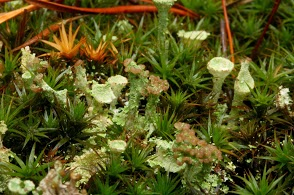 Moss and lichens seem to attract my macro lens