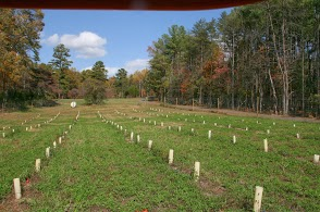 American chestnut breeding orchard: 308 seeds planted March 2012